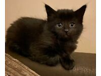 Kittens born 23rd Feb