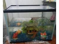 Starter fish tank with 3 little fishes inside.