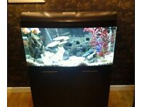 3.8 FT AQUA ONE AR 980 FISHTANK IN BLACK WITH MATCHING BLACK CABINET IN EXCELLENT CONDITION
