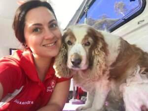 Grooming in sydney region nsw grooming gumtree australia free jims dog wash and grooming sydneycentral coast solutioingenieria Gallery