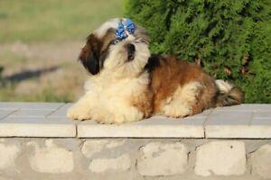 Adopt Dogs & Puppies Locally in Alberta | Pets | Kijiji Classifieds