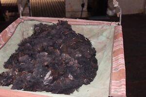 Raw lambs wool Merino black 700g Nedlands Nedlands Area Preview