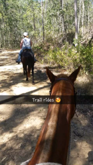 Ultimate trail riding horse