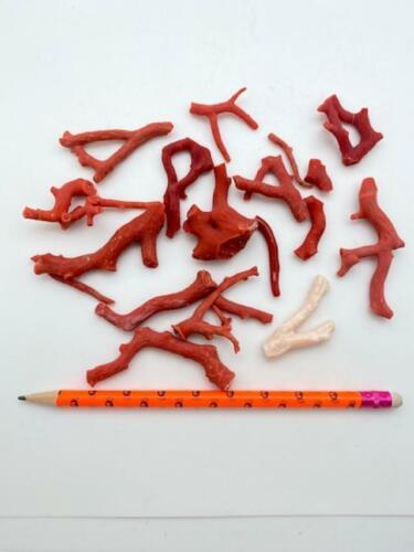 Precious Red Coral (Rough) Corallium rubrum 106.28 grams @ $2.25 per gram