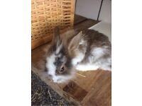 1 lonely baby rabbit left