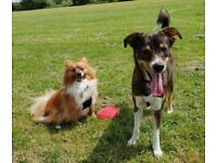 TippyTappy Dog Walking, boarding and pet sitting - Earlsfield and surrounding areas - £10 per hour