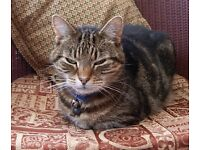 Cat Sitting - have your cat looked after in the comfort of their own home.