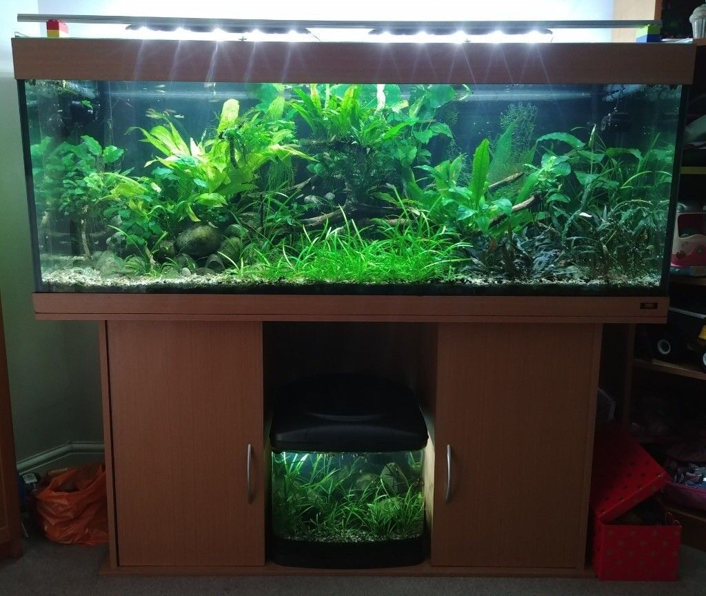 Juwel Rio 400 Aquarium With Custom Sliding Gl Top And Integrated Temperature Controller