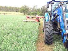 Quality Lucerne and Rhodes grass hay for sale (square and round) Landsborough Caloundra Area Preview