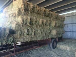 Lucerne Hay For Sale Biloela Banana Area Preview