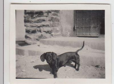 (F23003) Orig. Mini-Foto Hund, Dackel vor dem Hauseingang 1932
