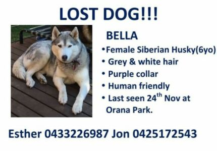 Missing dog! 6yo female Siberian Husky! $200 reward