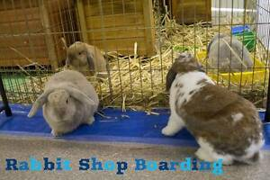 Exclusive Rabbit Boarding at the Rabbit Shop Booragoon Melville Area Preview