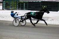 standardbred ownership groups