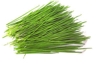 BIO Weizen 1 kg Keimsaat Samen für Keimsprossen Weizengras Sprossensaat Saatgut