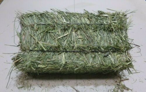 Timothy Hay,Good For Rabbits All Pets Get 5 Bales Get 15 Lbs. The Best On ebay!