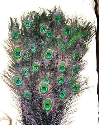100 Peacock Feathers W Eyes Stem Dyed Black 30-35 Length
