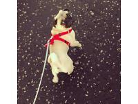 Dog walker service