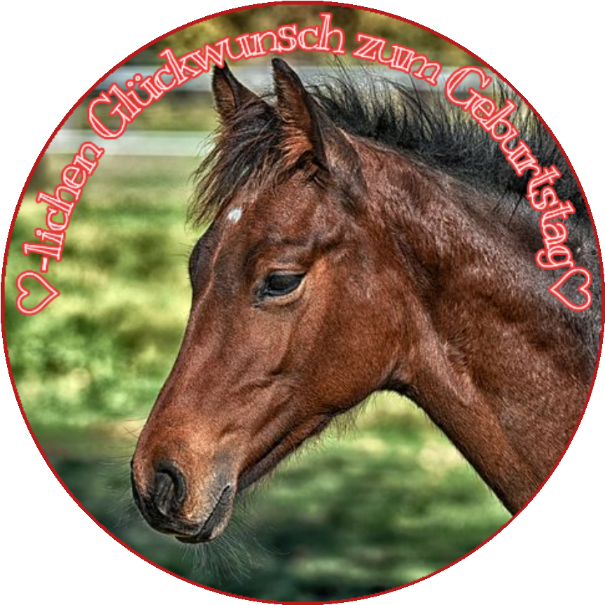 Tortenaufleger essbar Fondant rund 20cm durchmesser Geburtstag Pferd