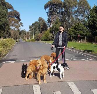 Professional Dog Walker and House/Pet Sitter