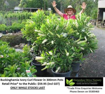 Need A SHADE or FEATURE Tree? YOU MUST SEE THESE! HS102