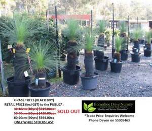 Grass Tree Black Boy Feature Tree HS115 Mudgeeraba Gold Coast South Preview