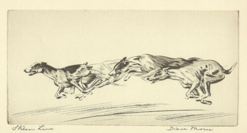 RARE DOG Print 1935 by Diana Thorne RACING COURSING GREYHOUND