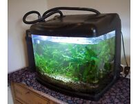 Shrimp/fish tank/aquarium. Fully planted with livestock and external filter. £80.