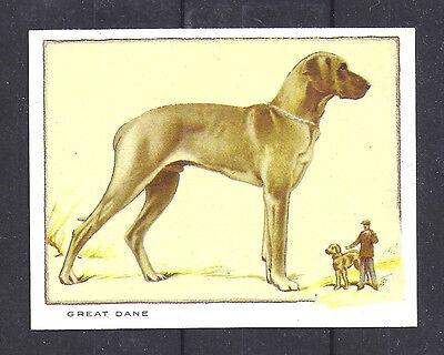 1934 UK Dog Full Body Portrait Gallaher Cigarette Large Trade Card GREAT DANE