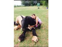 Companion pony /cob