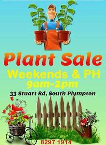 Plant sale this Saturday 25th South Plympton Marion Area Preview