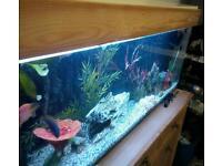 Fish tank 250L
