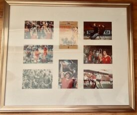 MASSIVE FRAMED & MOUNTED FOREST EUROPEAN CUP MONTAGE