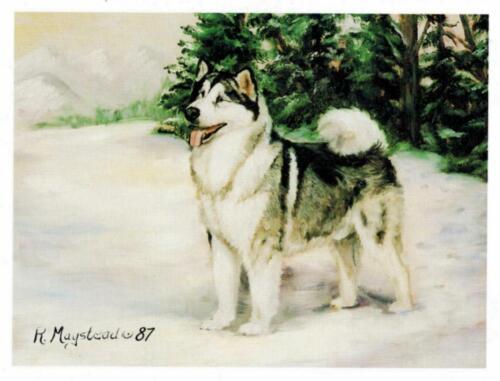 New Alaskan Malemute In Snow Notecard Set - 6 Note Cards By Ruth Maystead