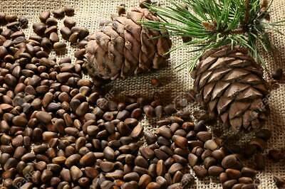 Pine Nuts Bird Pet Food Treats Parrot African Grey Cockatoo Drs. Foster & Smith ()