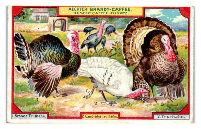 Wild and Domestic Turkeys, Brandt Caffee Additive German Trade Card