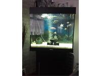 Juwel Lido 120, Tank + Cabinet Full Set Up