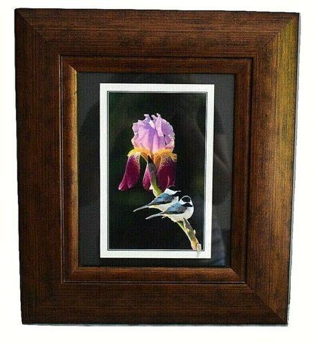"Black Capped Chickadee Pair on Bearded Iris Stem Framed Photograph 15.5"" x13.5"""