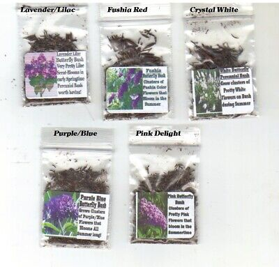Lot of 5 Butterfly Bush Over 400 Seeds of Fushia Lilac White Purple and Pink #5