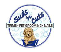 Certified Groomer- apointments available now!