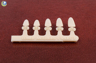 Dental Polycarbonate Temporary Crowns Tooth Las Lower Anterior Short 5 Sizes