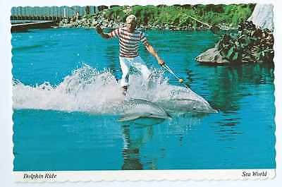 Sea World Amusement Park a Roman Ride On Dolphins, Unposted- Postcard