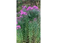 Plants - Various - For Dividing
