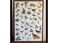 Vintage bird print framed