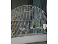 Girl budgie 8 weeks old still a baby full cage and accessories only had her 3 weeks pick up only
