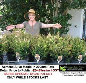 Acmena Allyn Magic Lilly Pilly 200mm Pots SUPER SPECIAL $10 Mudgeeraba Gold Coast South Preview