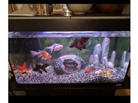 80 litres Fish tank for sale