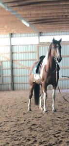 Lovely mare for part board