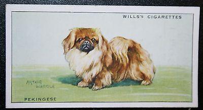 Pekingese Toy Dog   Original 1937 Illustrated Card ## VGC
