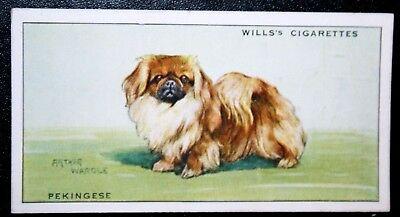 Pekingese  Toy Dog by Wardle   Original 1937 Vintage Card ### VGC